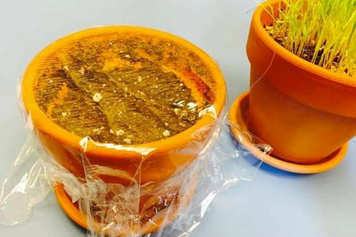 استخدام غلاف الطعام البلاستيكي تسريع إنبات البذور