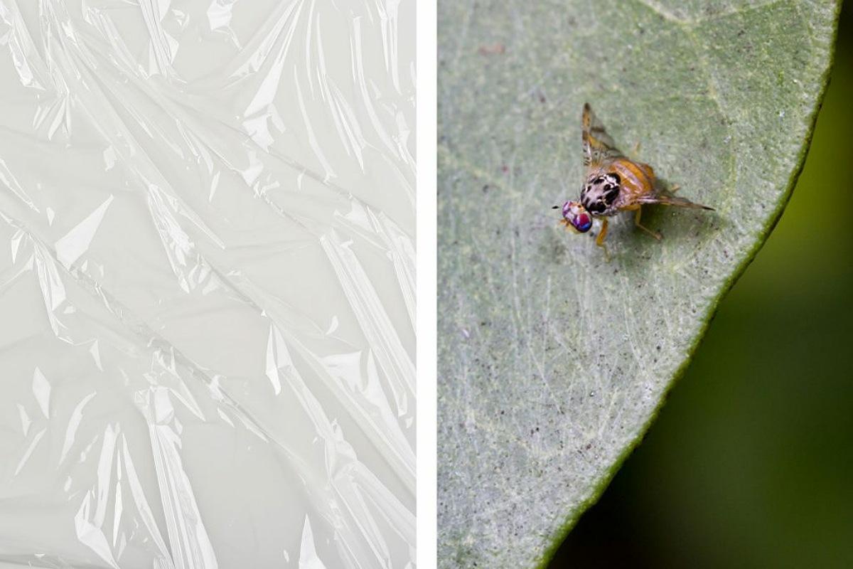 غلاف الطعام البلاستيكي صنع مصيدة للذباب و الحشرات