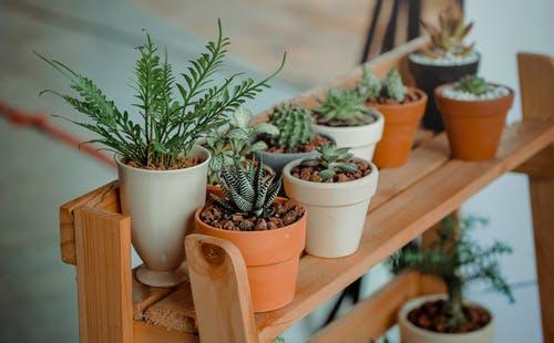 نصائح تساعد في العناية بنباتات الشرفة : رى النباتات بحساب