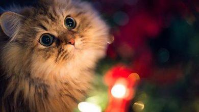 Photo of تربية القطط الصغيرة