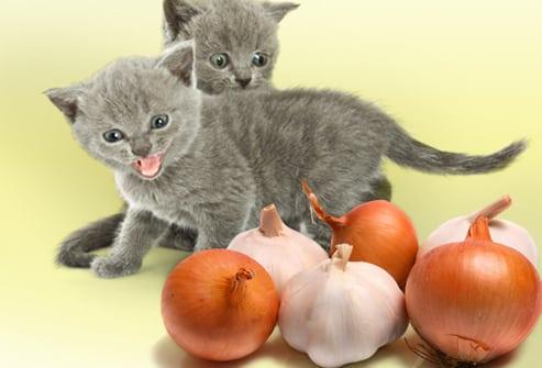 القطط الصغيرة