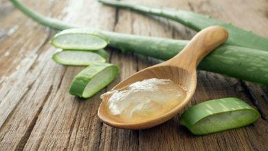 15 فائدة صحية وعلاجية لنبات الألوفيرا