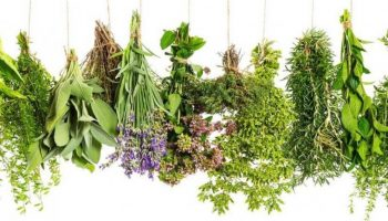 ما هي أبرز الأعشاب والتي تساعد في علاج النحافة