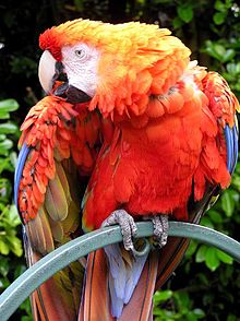 220px-Parrot.red.macaw.1.arp.750pix