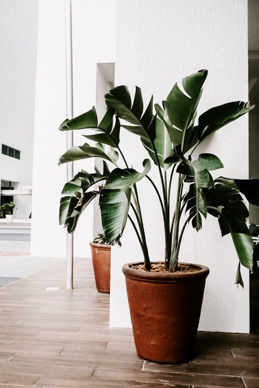 نصائح تساعد في العناية بنباتات الشرفة : إضافة الأسمدة