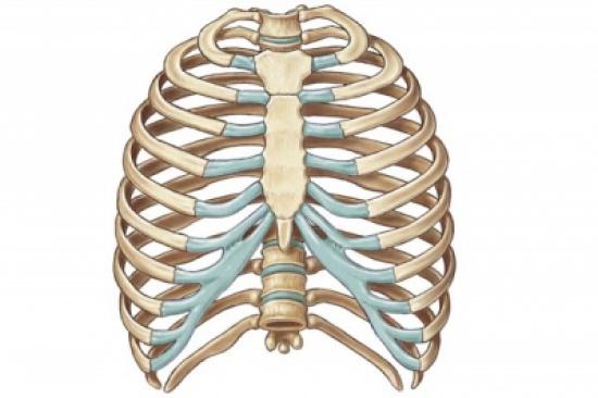 ماهو الهيكل العظمي للإنسان