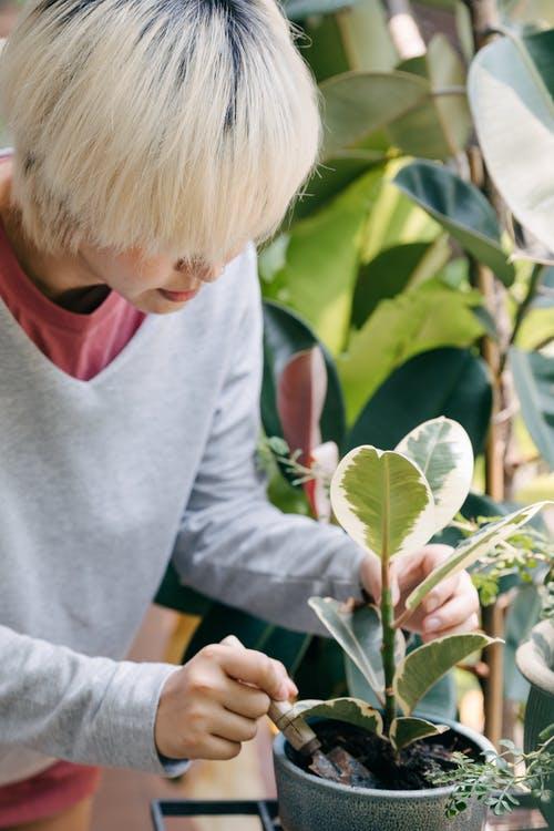 نصائح تساعد في العناية بنباتات الشرفة : أختر نوع تربة جيد