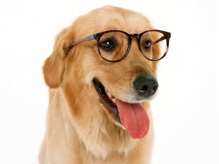 معلومات عن الكلاب