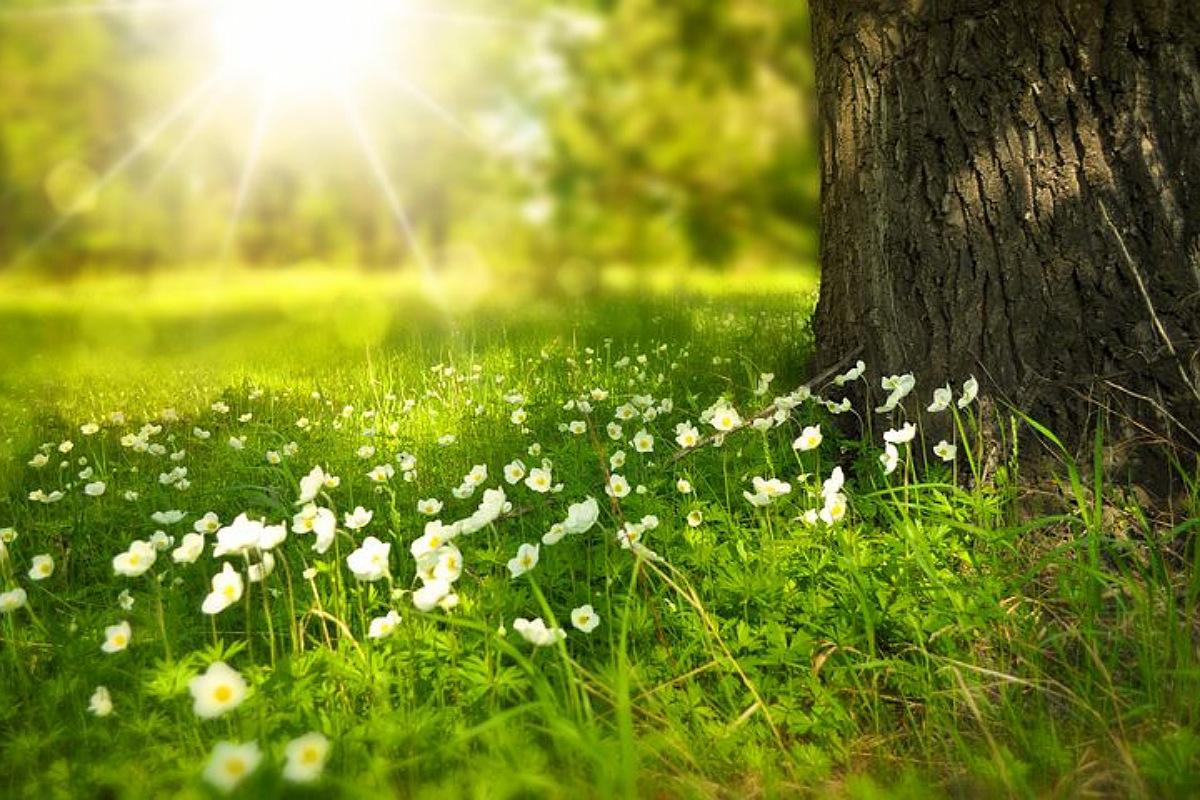عادات تطيل عمرك : اقضِ المزيد من الوقت في الطبيعة