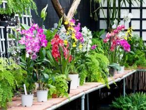 نصائح لزراعة نباتات في حديقتك