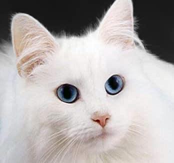 Photo of قطتي الأليفة