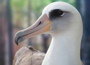 albatross-banner