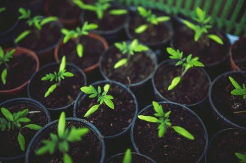 نصائح لنجاح الزراعة بالأسمدة الطبيعية
