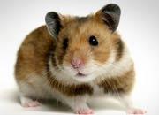 hamster-banner