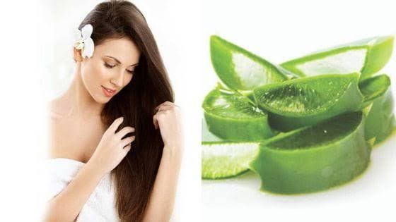 من فوائد جل الصبار الحفاظ علي صحة الشعر