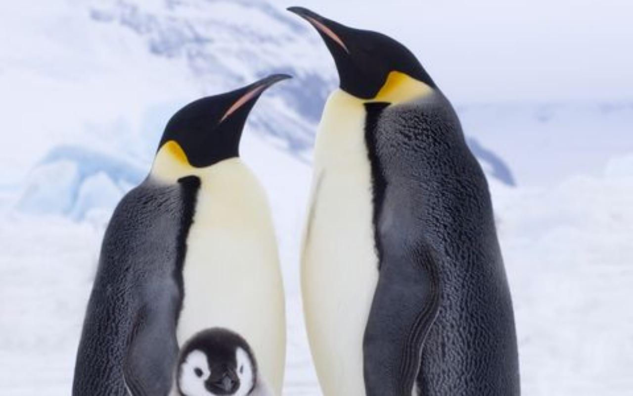 حقائق عن البطريق