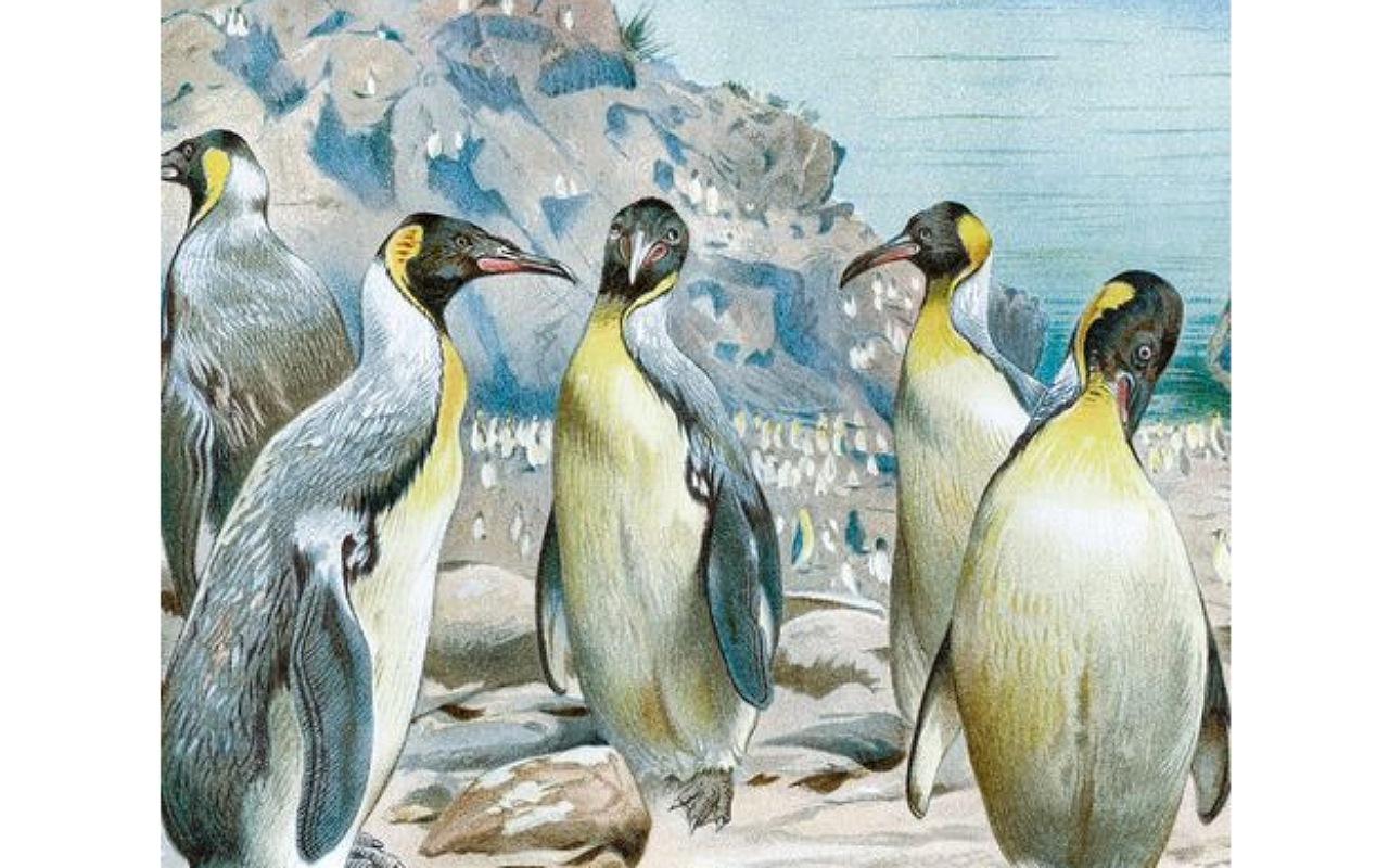حقائق عن البطريق : سلالة البطاريق المنقرضة