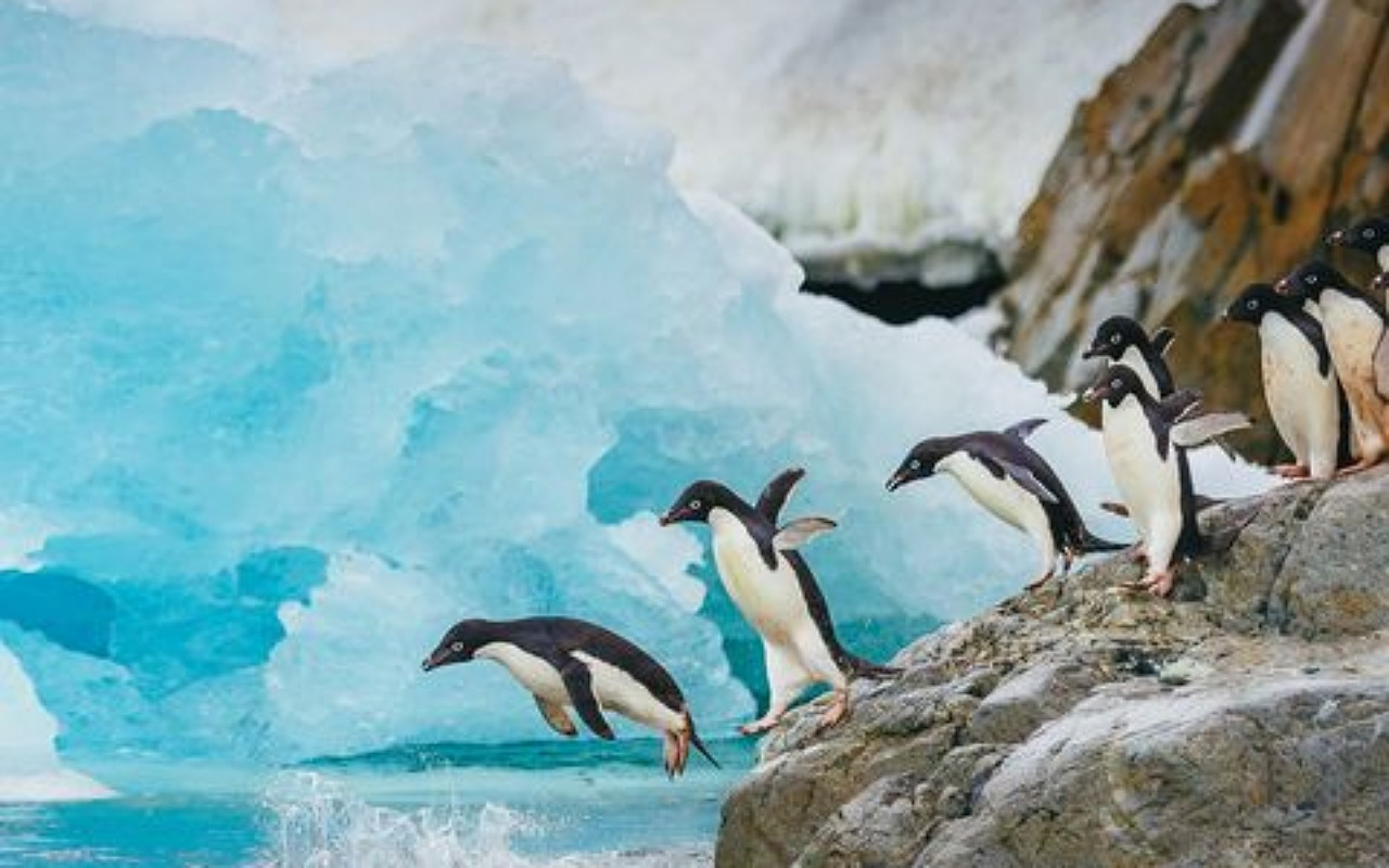 حقائق عن البطريق : القفز في الهواء