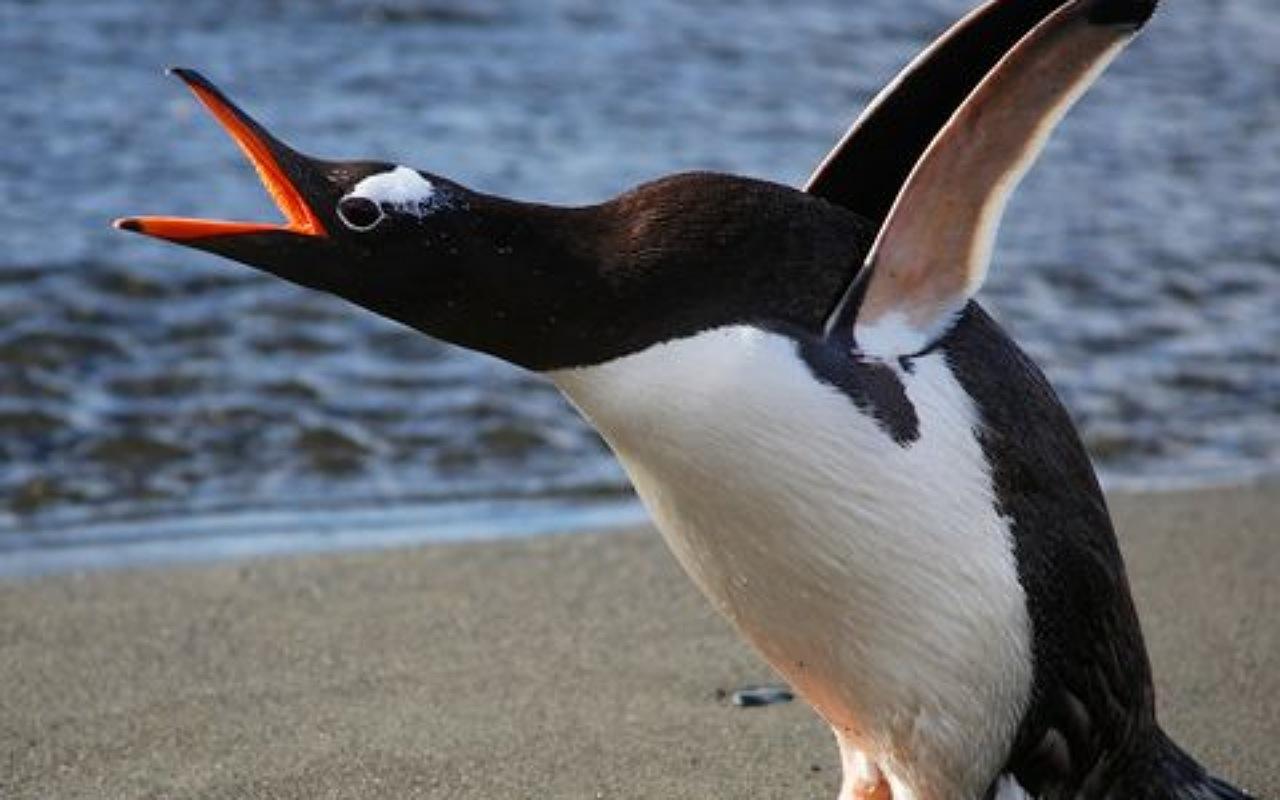 حقائق عن البطريق : البطريق