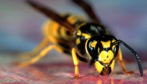 insect-sting_342x198_BB2483-001