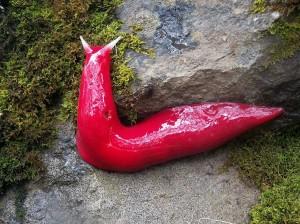 mt-kaputar-pink-slugs-2[6]