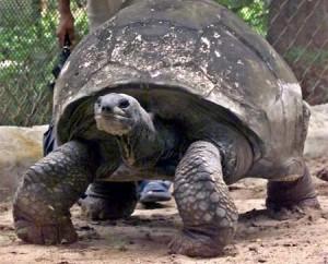 oldest-animals