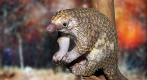 pangolin-sitting-on-wood