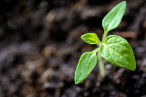 """طريقة عمل تربة زراعية بالمنزل""""الكومبوست"""""""