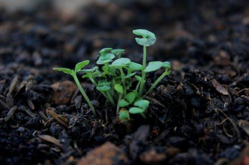 التربة الصالحة للزراعة المنزلية