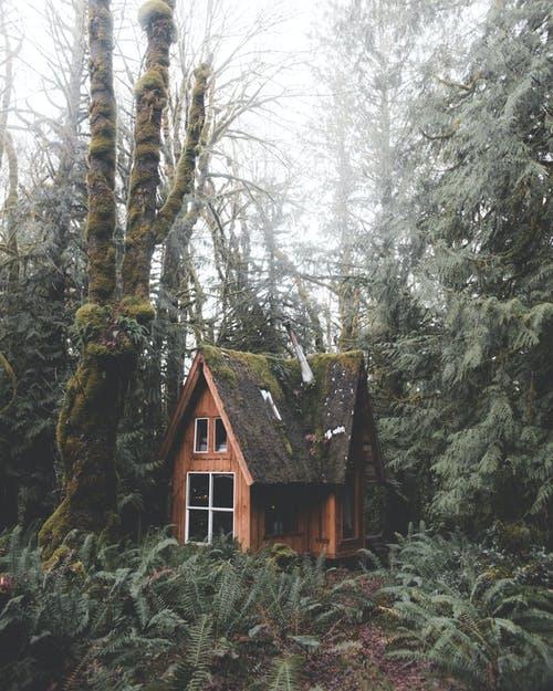 مزايا البيوت الخشبية