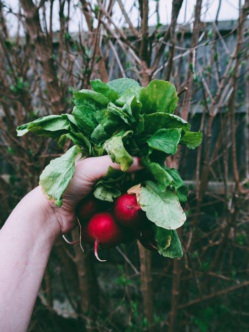 أسمدة طبيعية للنباتات : محلول الخميرة المغذى