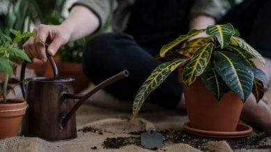 Photo of أسمدة طبيعية للنباتات : 5 أسمدة لنباتاتك المنزلية من مطبخك