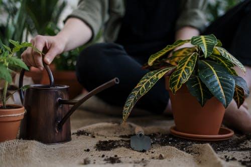 أسمدة طبيعية للنباتات