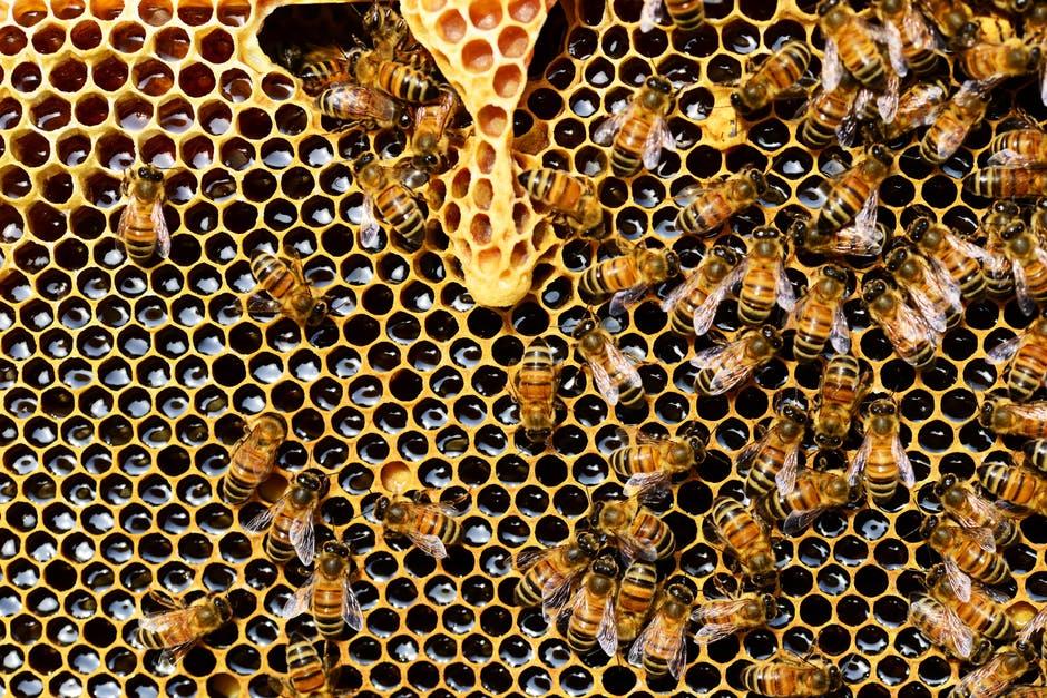 فوائد العسل للصحة