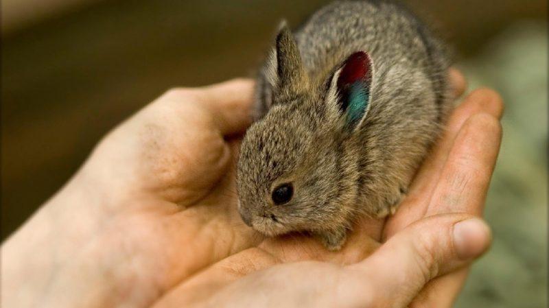 أصغر الحيوانات حول العالم