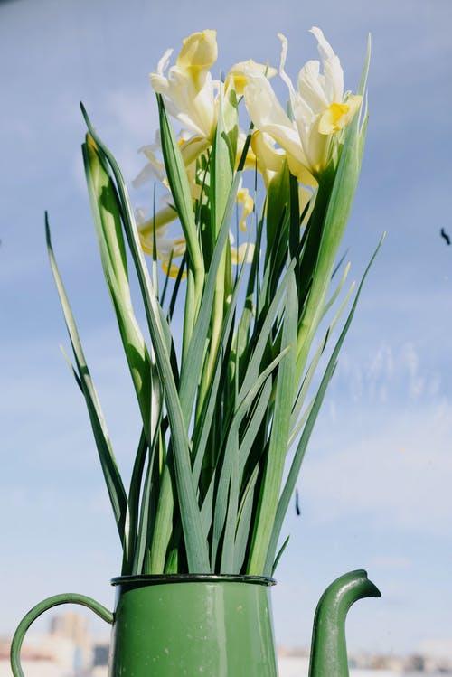 نصائح تساعد في العناية بنباتات الشرفة : إختر الوعاء المناسب