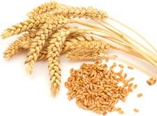whole_grains