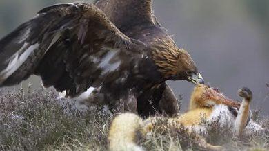 Photo of الانتخابات و الطبيعة
